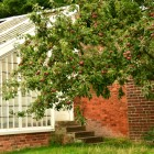 Calke Abbey Apples and vinery