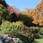 St Andrews island bed and Quercus rubra