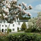 Magnolias-framing-Jermyns-House