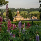 Chatsworth 2016_kitchen garden lupins