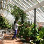 Houghton garden pic 1