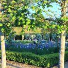 Houghton garden pic 2