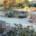 A frosty winter morning in the Water Garden, Beth Chatto Gardens.
