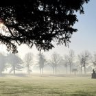 The Great Fountain Garden misty morning 2014