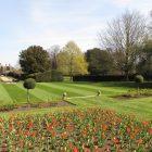 Lilyfire tulips