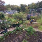 Aldourie Fe & Elsie in veg garden
