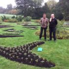 Audley - Bedding planting 2019 3