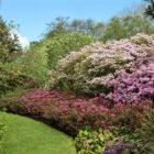 St Andrews Botanic Garden - Azalea border